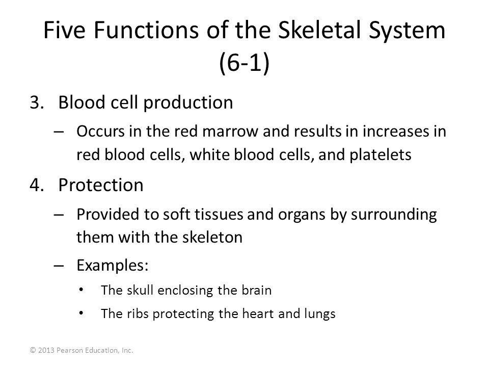 6 The Skeletal System Ppt Download