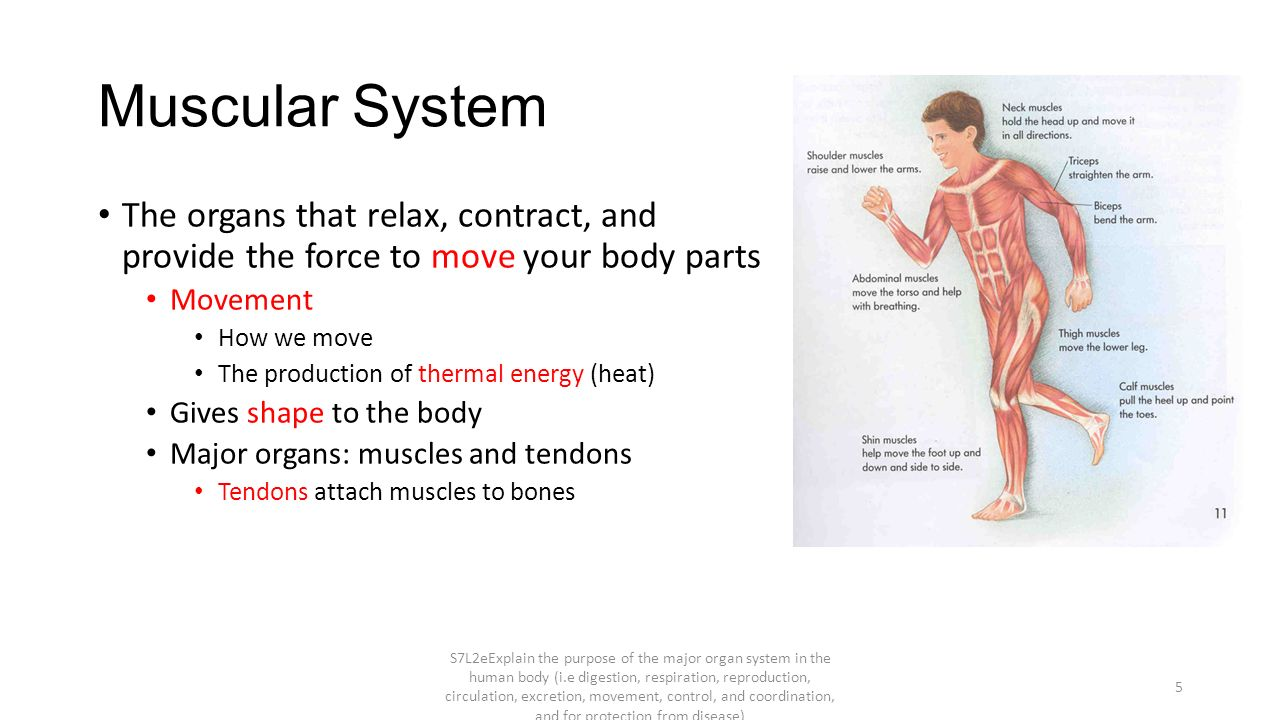 Functions Of Our Organ Systems Part 1 Ppt Video Online Download