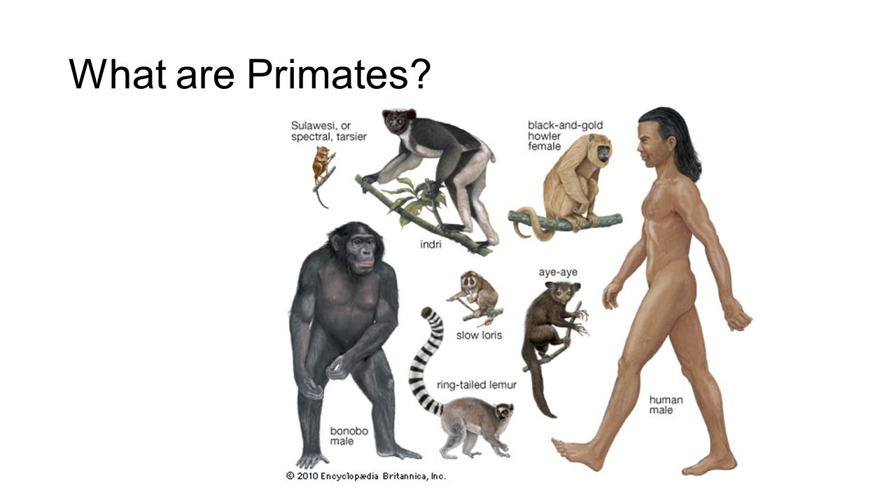 Did humans evolve from apes yahoo dating 1