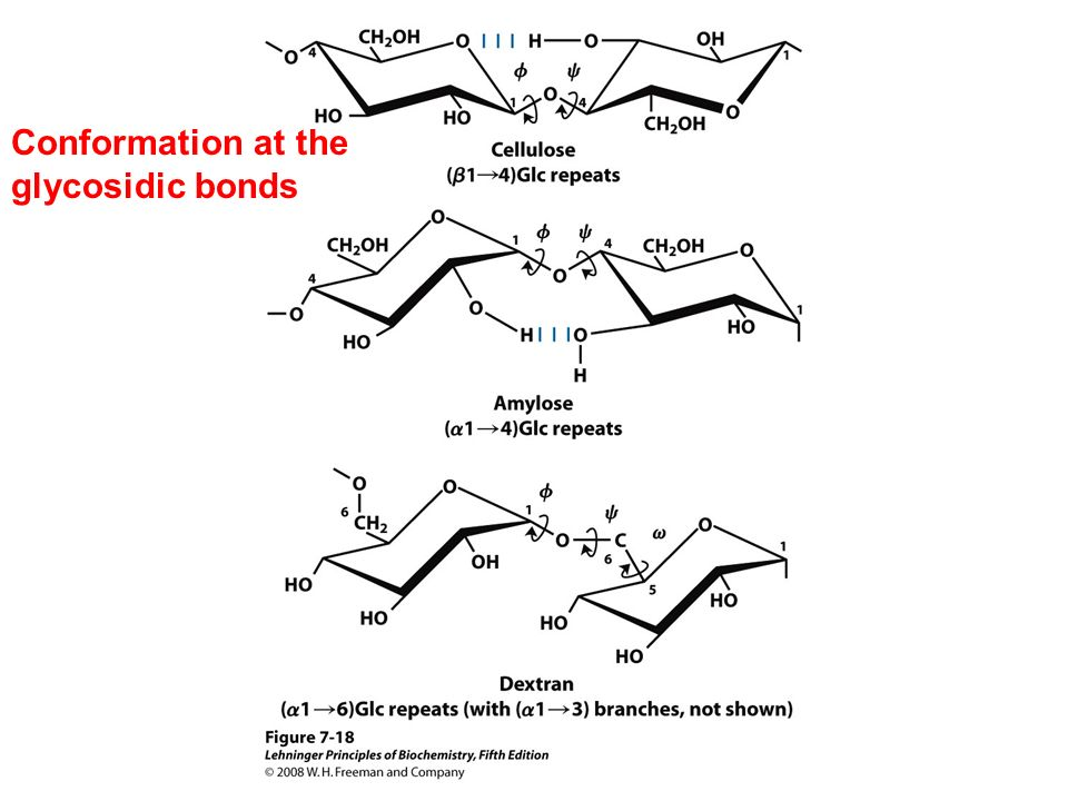 Lehninger principles of biochemistry ppt download conformation at the glycosidic bonds ccuart Choice Image