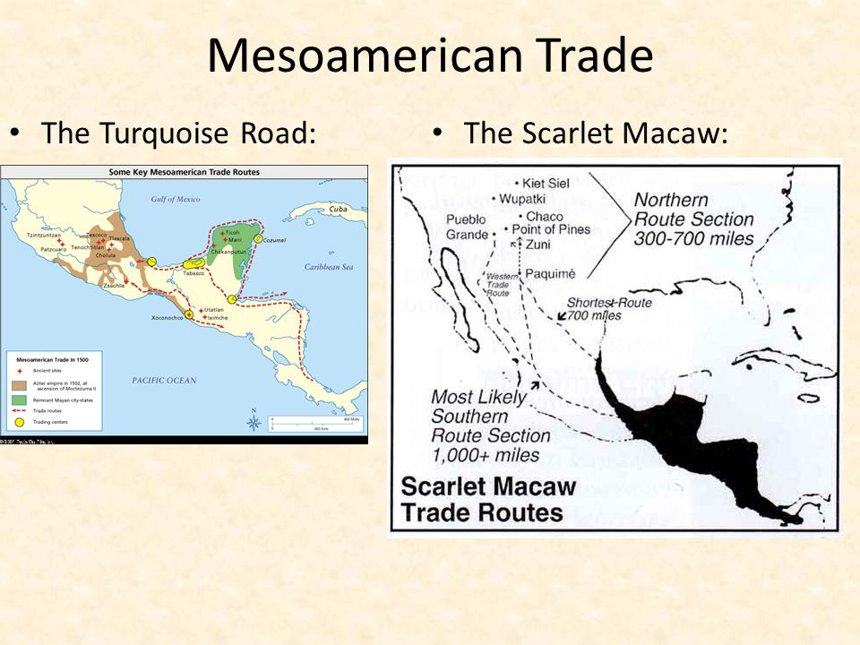 Mesoamerican Trade The Turquoise Road: The Scarlet Macaw: