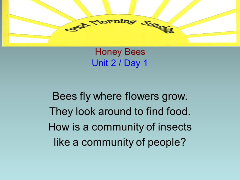 Bees fly where flowers grow. They look around to find food.