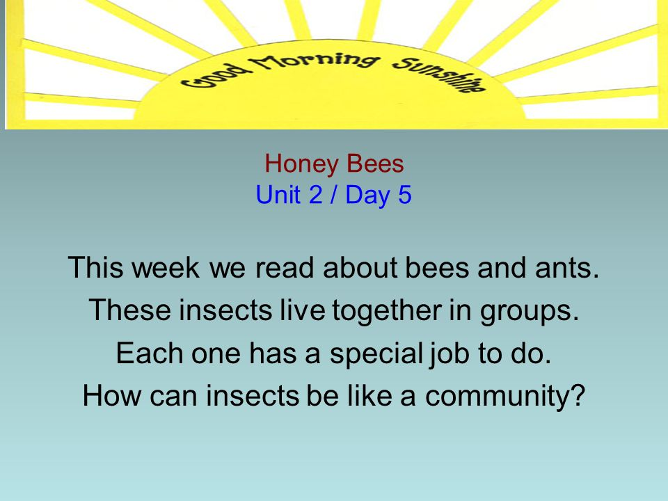 This week we read about bees and ants.