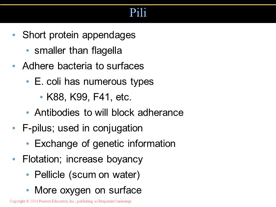Pili Short protein appendages smaller than flagella