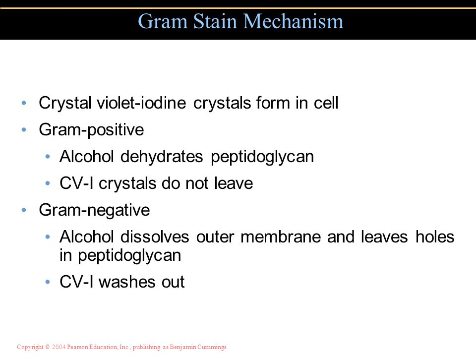 Gram Stain Mechanism Crystal violet-iodine crystals form in cell
