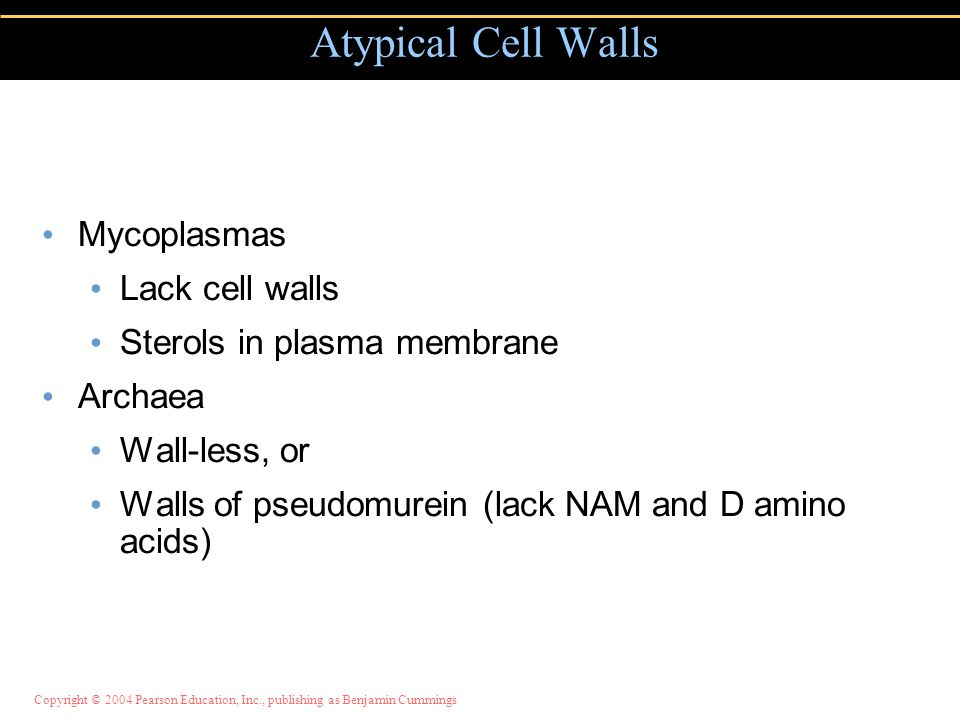 Atypical Cell Walls Mycoplasmas Lack cell walls