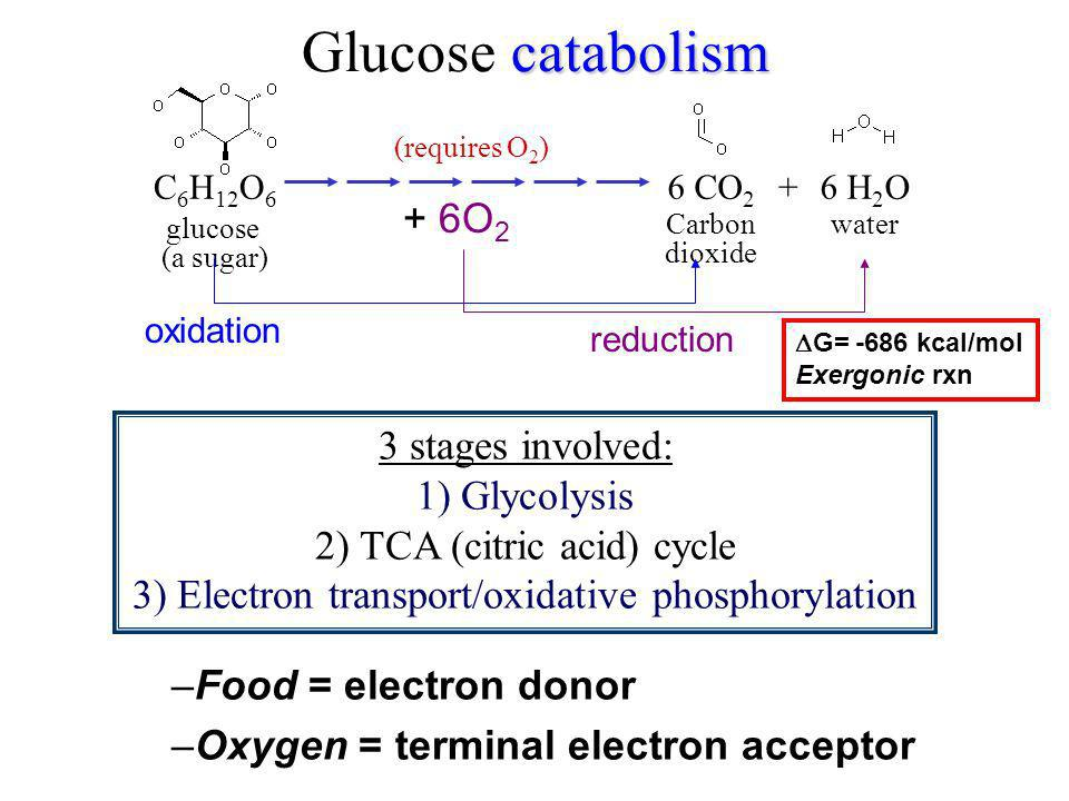 Glucose catabolism + 6O2 3 stages involved: 1) Glycolysis