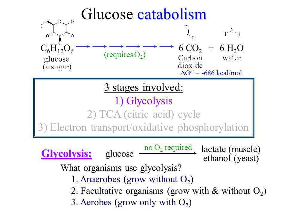 Glucose catabolism 3 stages involved: 1) Glycolysis