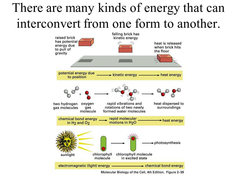 There are many kinds of energy that can interconvert from one form to another.