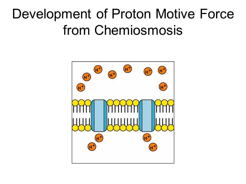 Development of Proton Motive Force from Chemiosmosis