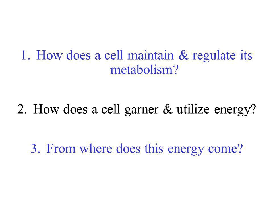 How does a cell maintain & regulate its metabolism