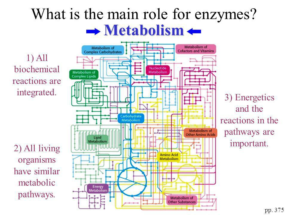What is the main role for enzymes Metabolism