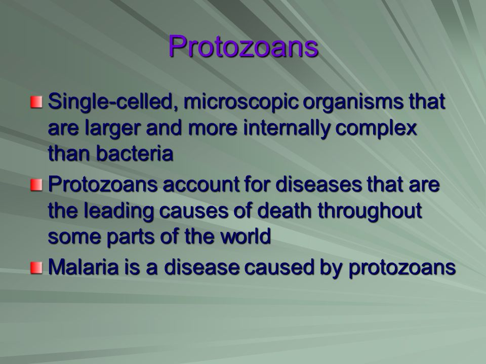 Protozoans Single-celled, microscopic organisms that are larger and more internally complex than bacteria.