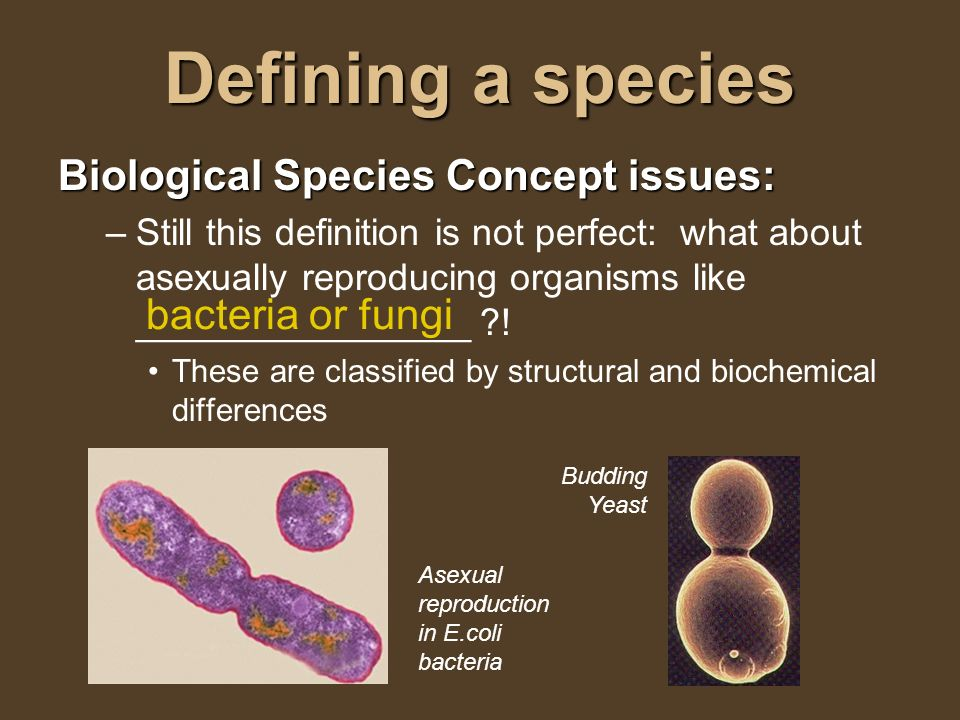 Asexual reproduction species concept