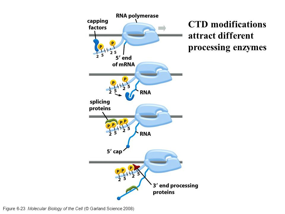 human molecular genetics garland science pdf