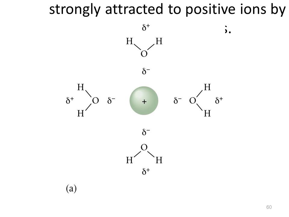 Figure 12.6: Polar water molecules are strongly attracted to positive ions by their negative ends.