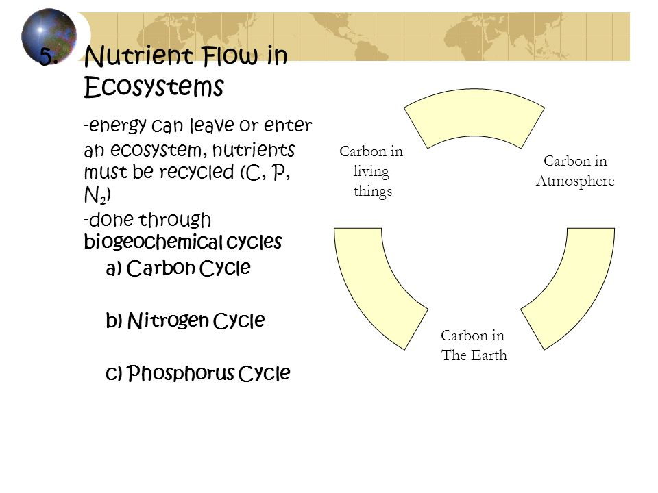 Nutrient Flow in Ecosystems