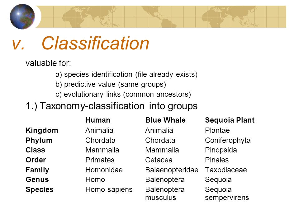 Classification 1.) Taxonomy-classification into groups