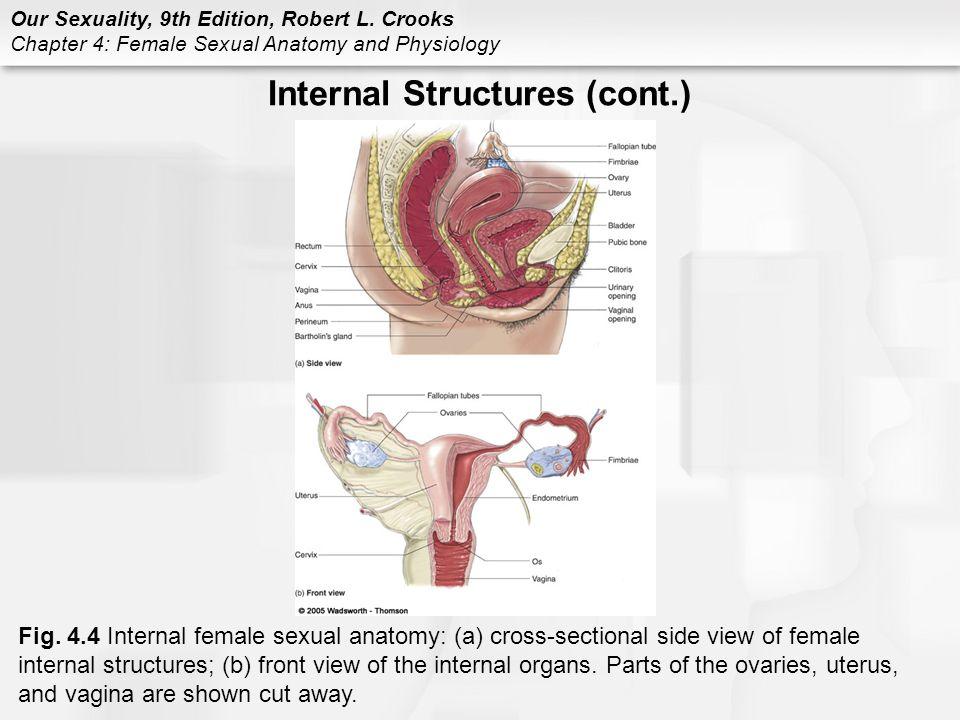 Female pleasure anatomy