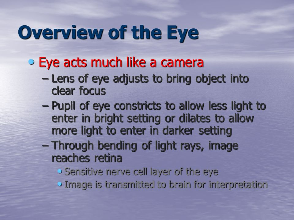 The Special Senses Eye Ear Ppt Video Online Download. Overview Of The Eye Acts Much Like A Camera. Worksheet. The Eye And The Camera Worksheet At Clickcart.co