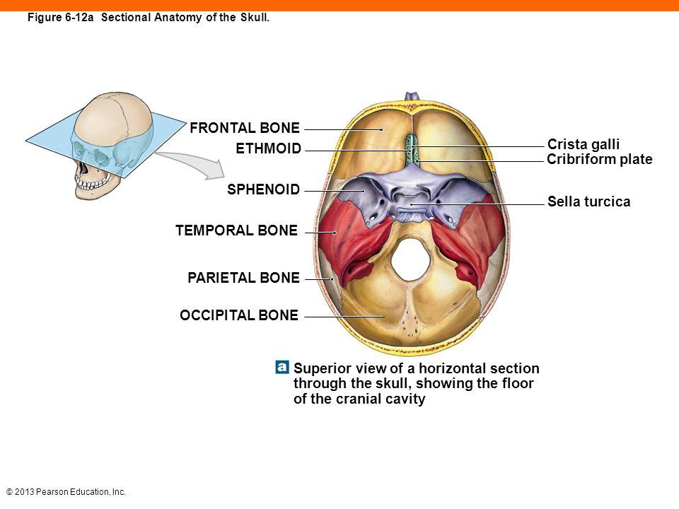 6 The Skeletal System. - ppt download