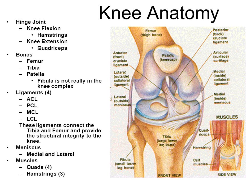 Sports Medicine II THE KNEE and Hip Mrs. Marr. - ppt video online ...