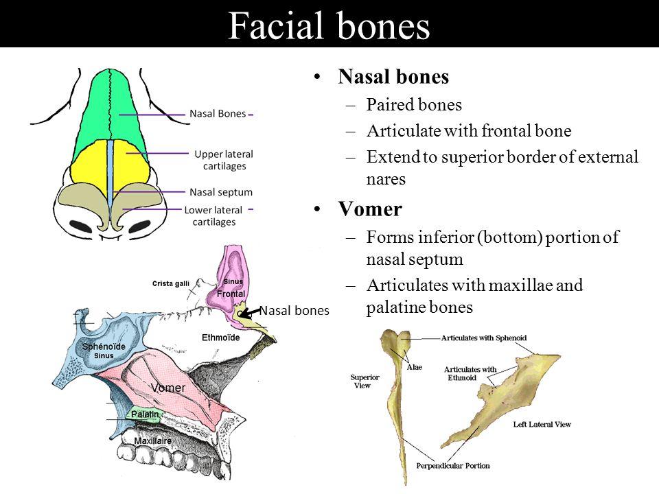 Anatomy Of Skeletal Elements Ppt Video Online Download