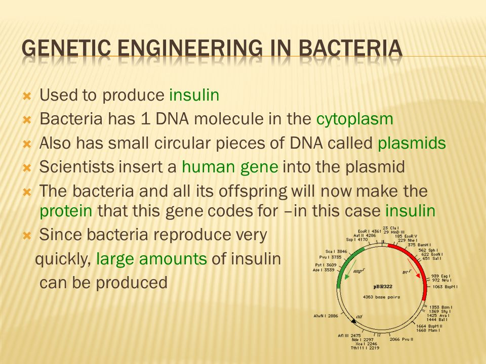 Genetic Engineering in Bacteria
