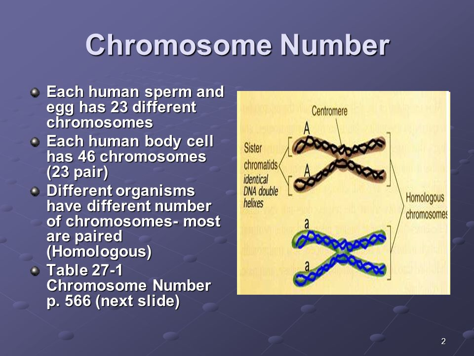 Chromosomes in human sperm