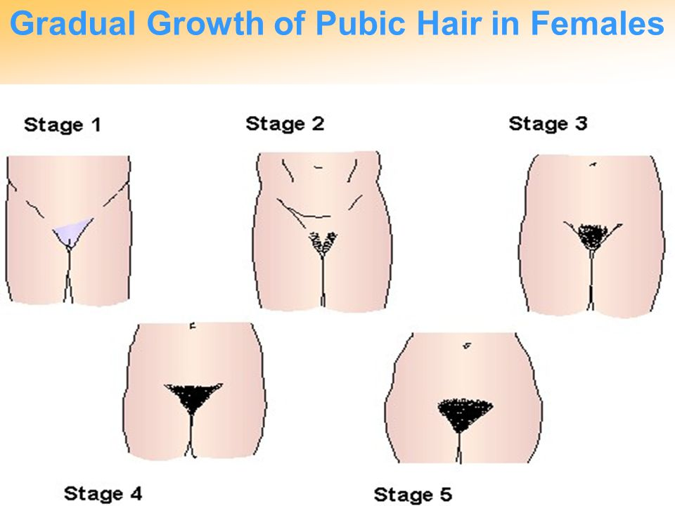 With you Why do girls have public hair