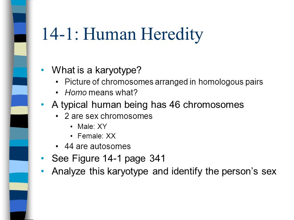 14-1: Human Heredity What is a karyotype