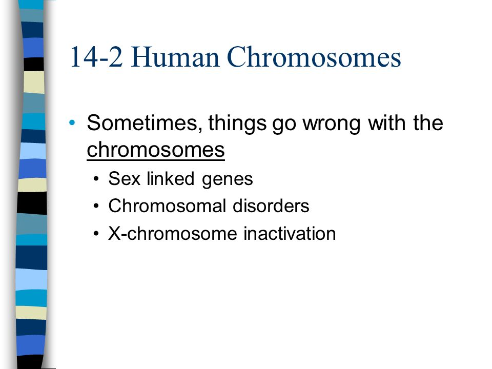 14-2 Human Chromosomes Sometimes, things go wrong with the chromosomes