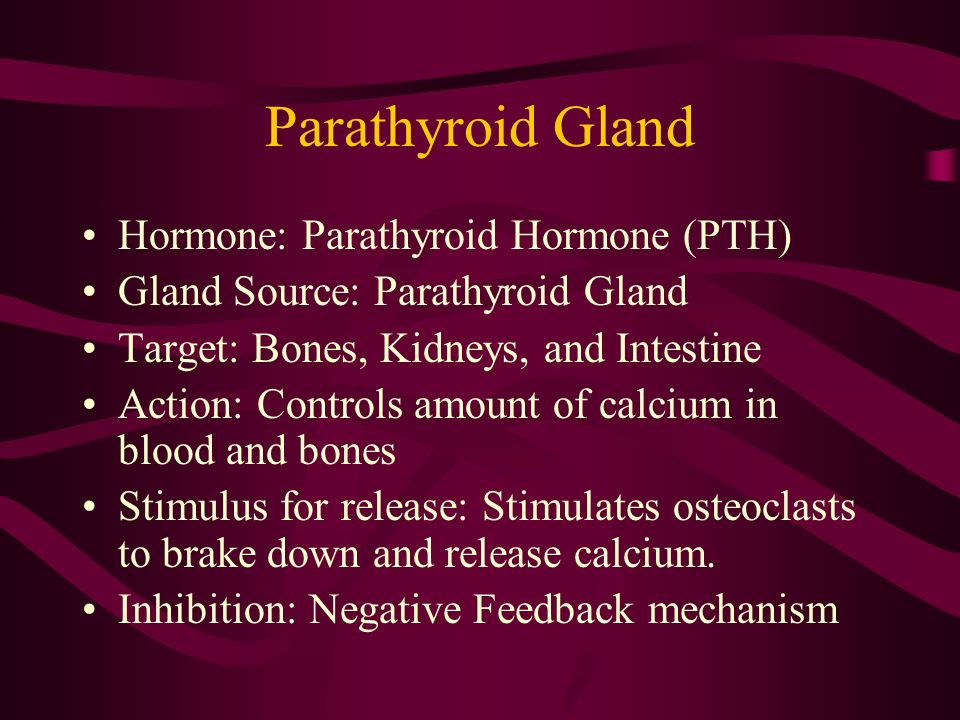 Parathyroid Gland Hormone: Parathyroid Hormone (PTH)