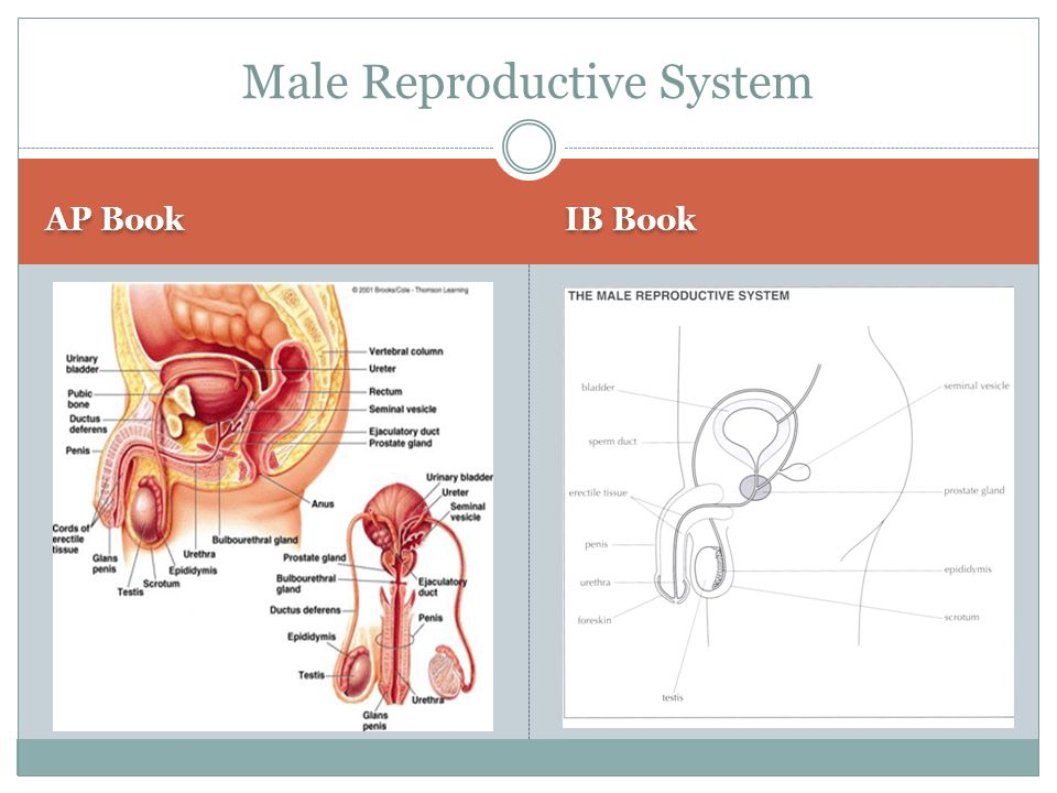 reproductive system essay If you have an assignment to compose an essay about reproductive system, be sure to read the following paper proofread example that may come in handy.