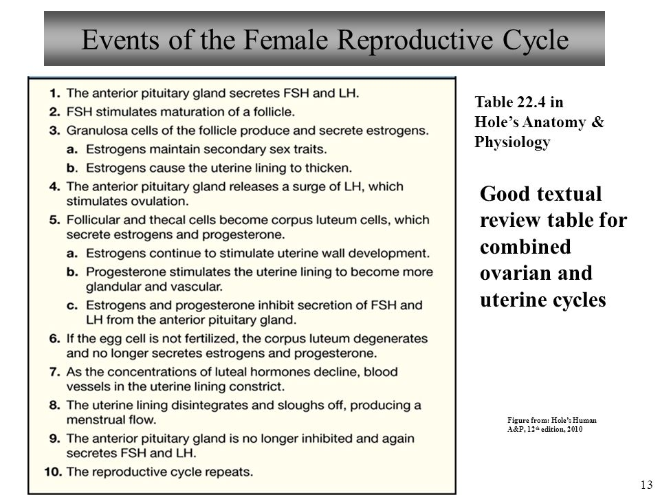 Anatomy And Physiology Female Reproductive System Ii Ppt Video