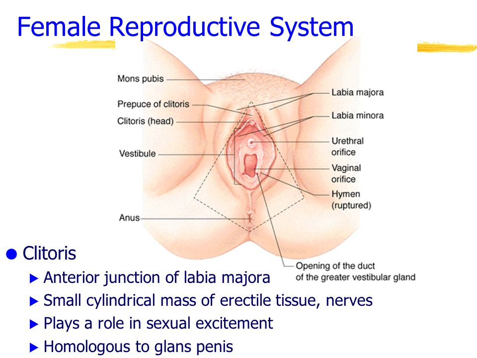 Benign Vaginal Cysts And Lesions