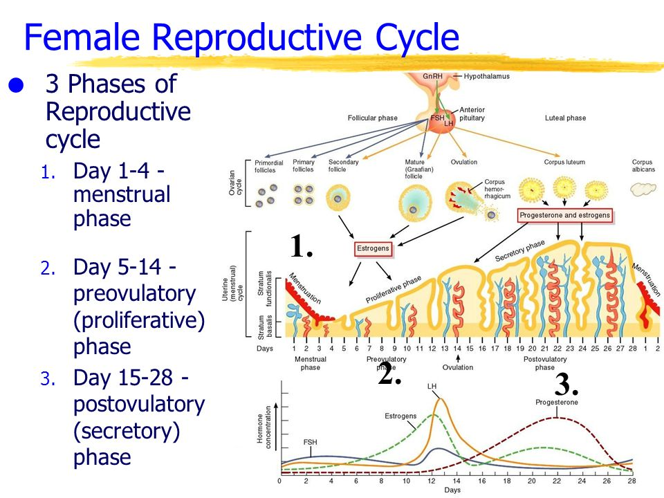 The Reproductive System Ppt Video Online Download