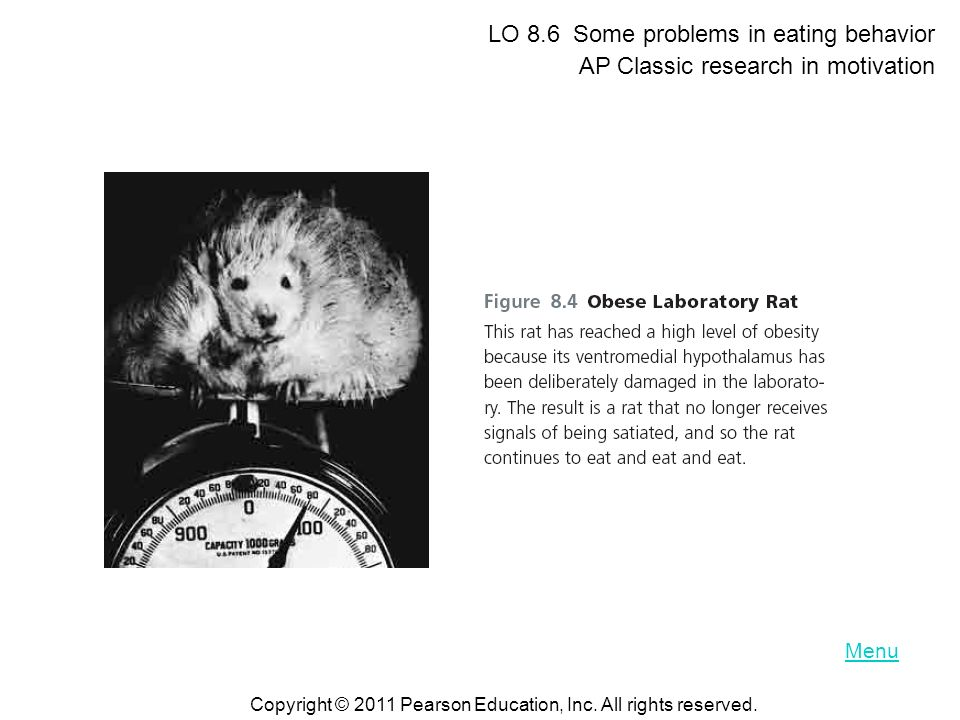 LO 8.6 Some problems in eating behavior