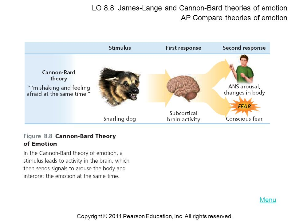 LO 8.8 James-Lange and Cannon-Bard theories of emotion