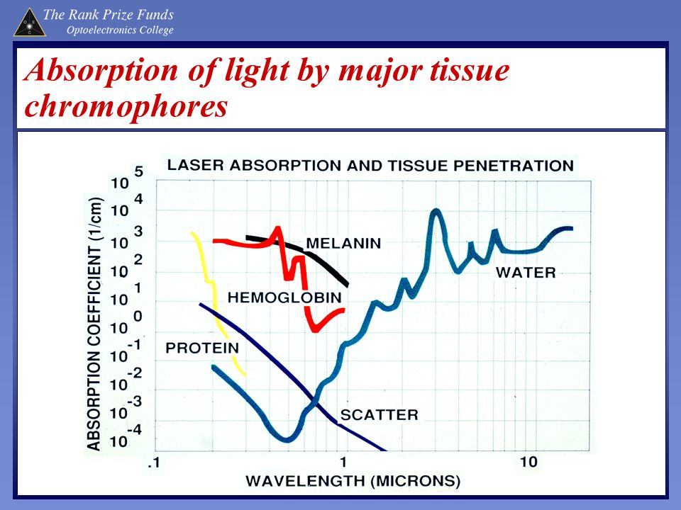 Absorption of light by major tissue chromophores