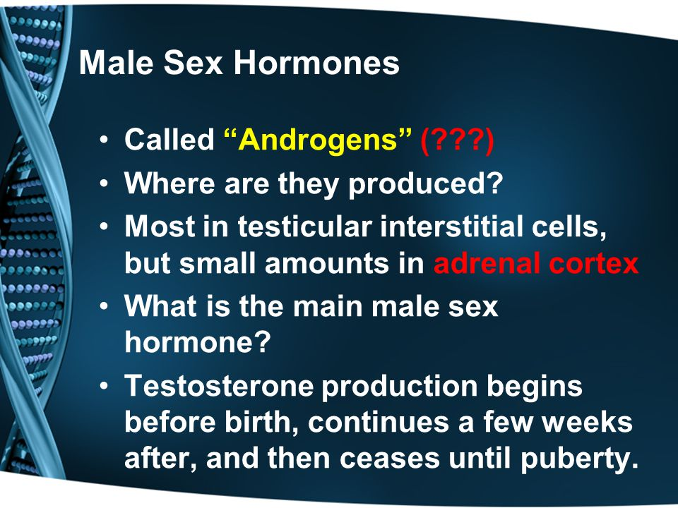 What is the male sex hormone called photos 599
