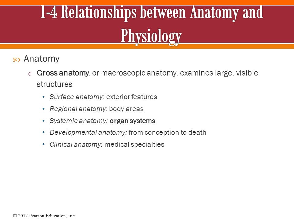 An Introduction to Studying the Human Body - ppt video online download