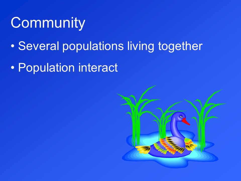 Community Several populations living together Population interact