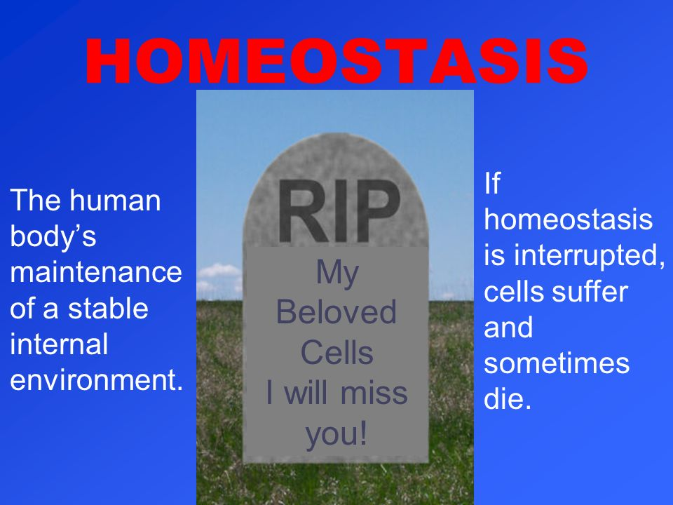 HOMEOSTASIS My Beloved Cells I will miss you!