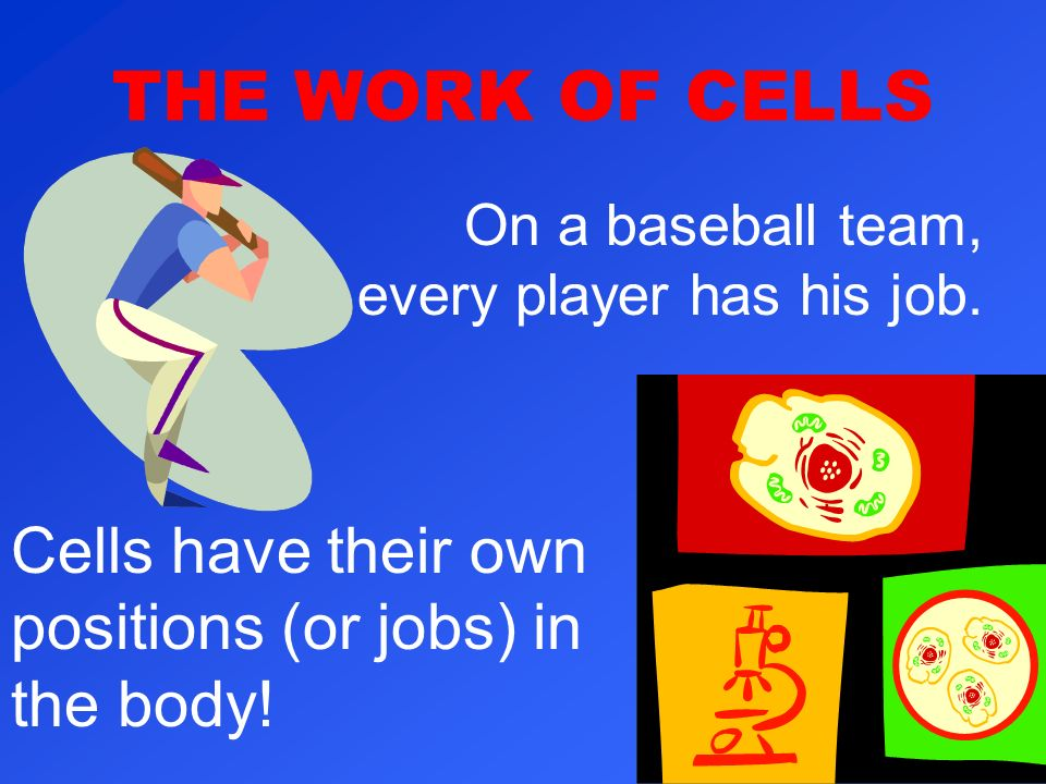 THE WORK OF CELLS On a baseball team, every player has his job.