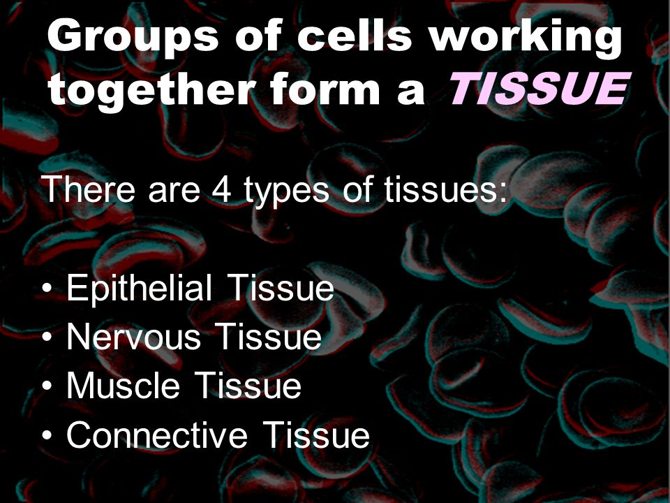 Groups of cells working together form a TISSUE