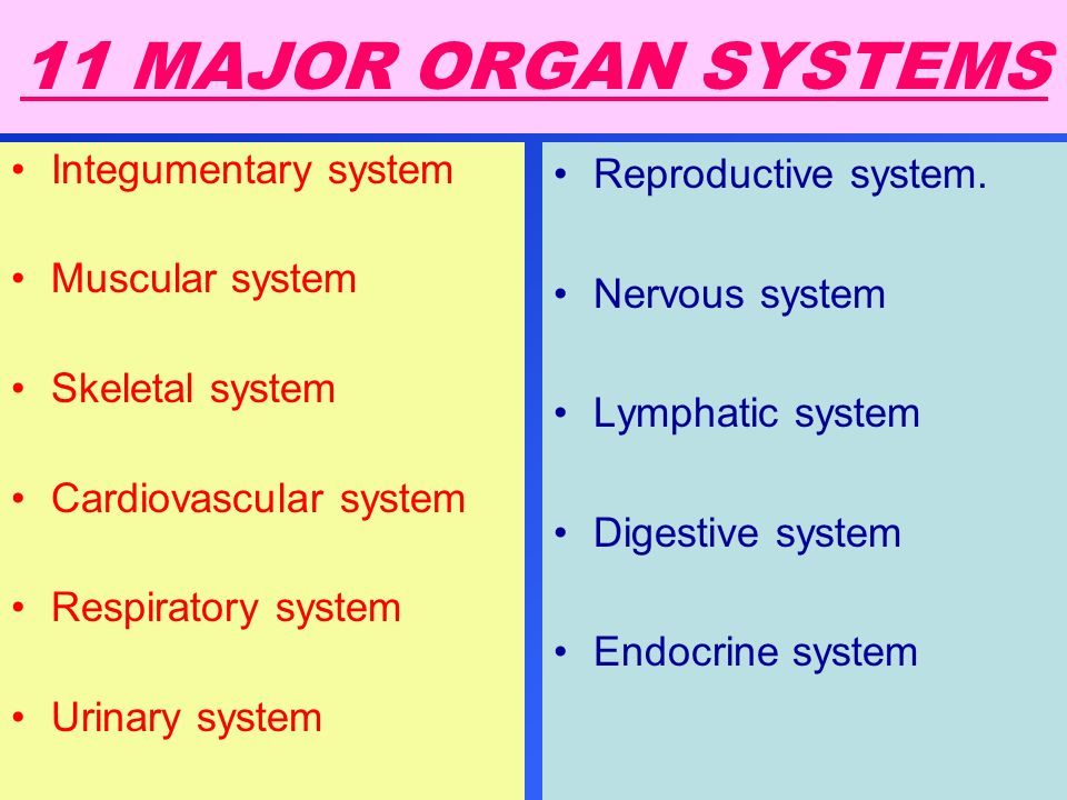 11 MAJOR ORGAN SYSTEMS Integumentary system Muscular system