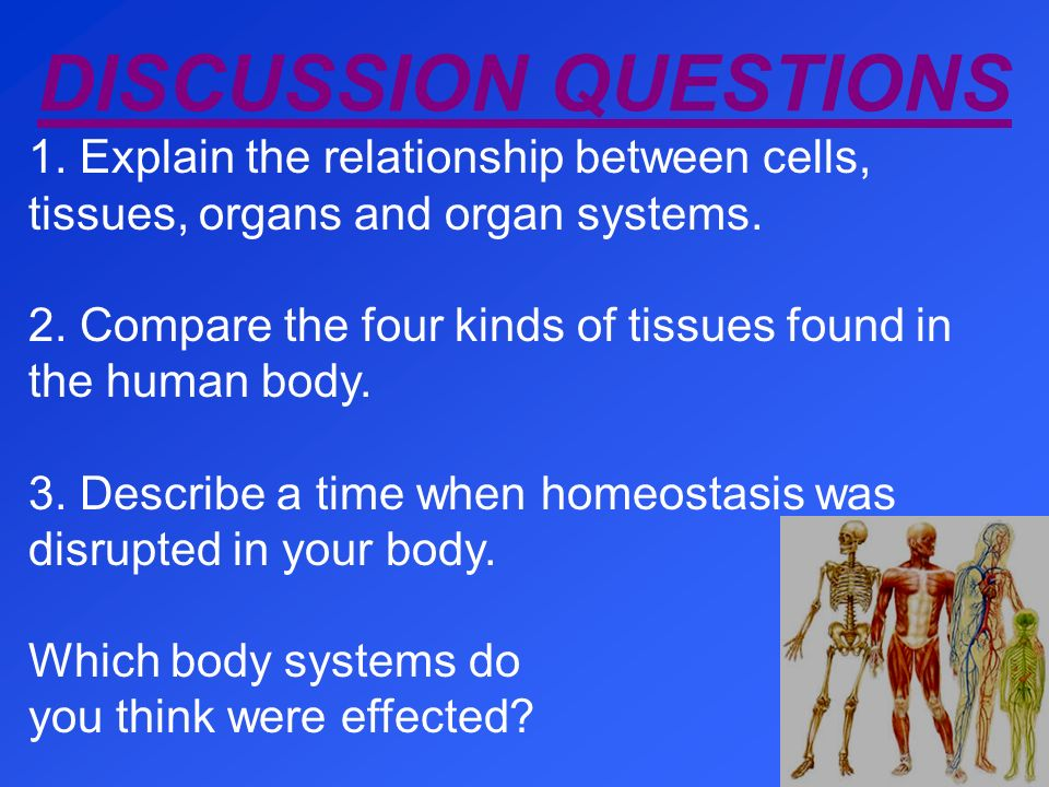 DISCUSSION QUESTIONS 1. Explain the relationship between cells, tissues, organs and organ systems.