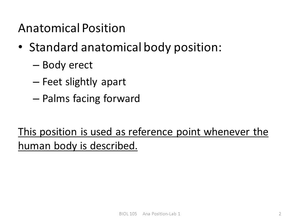 Overview of Anatomy and Physiology - ppt download