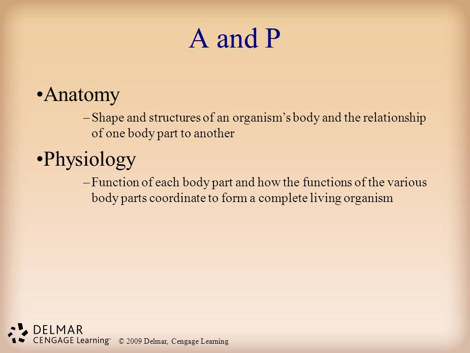 Introduction To The Structural Units Ppt Video Online Download